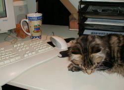 Foto: PC mit Tastatur, Tasse Kaffee und schlafendem Sammy