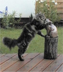 Foto: Katze beisst ins Ohr einer Katzenfigur