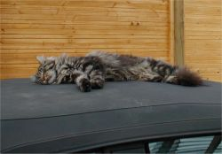 Foto: Sammy schläft auf dem Cabrio-Dach