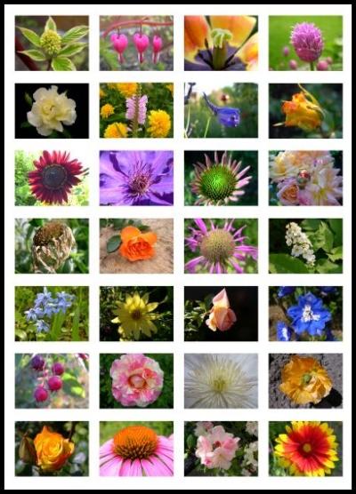 Fotocollage mit Blumenbildern