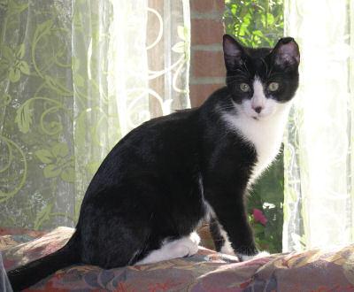 schwarzweißes Kätzchen auf der Sofalehne