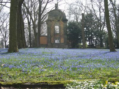 Blausternblüten vor dem Küchengartenpavillon
