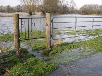 überflutete Wiese