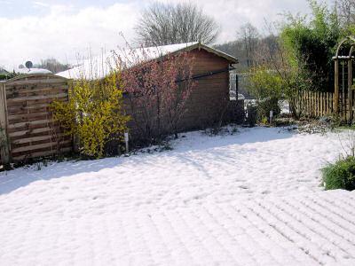 schneebedeckter Rasen und blühende Sträucher