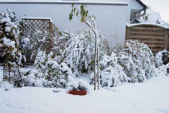 Garten mit dicker Schneedecke